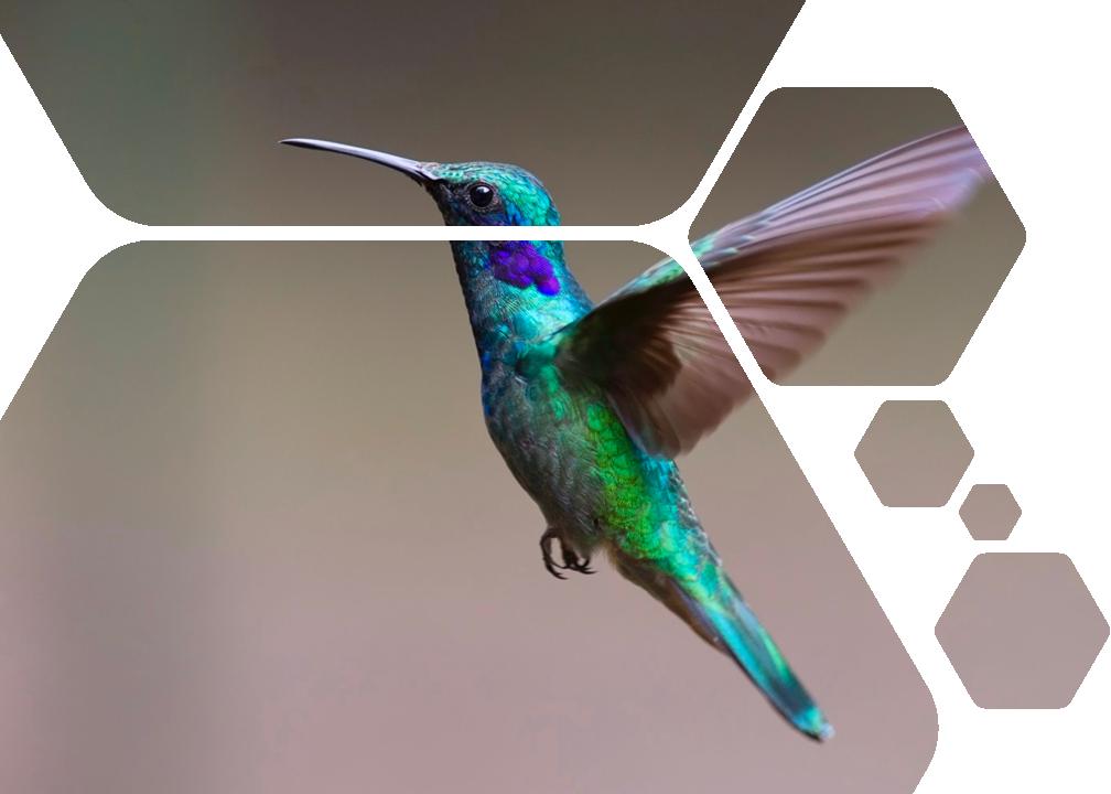 Fenno_Referenssi banneri lintu v2